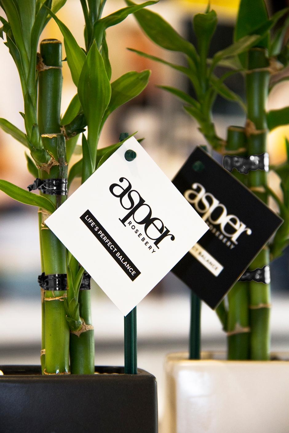 Asper|Mini bamboos